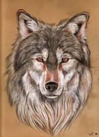 Wolf by Ferluner