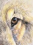 Wolf Eye ACEO
