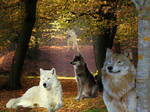 Wolfs in the Forest