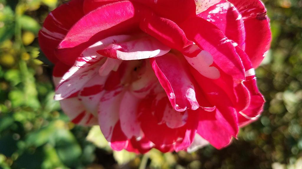 Cell Study - Rose Garden #3 by MisfitsTamara
