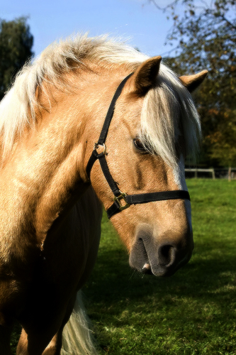 My Horse Kaidan (Edited) by MassEffectFan2013