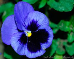 Blue Beauty by AngelaLeonetti