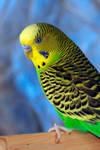 Spaz The Little Green Parakeet