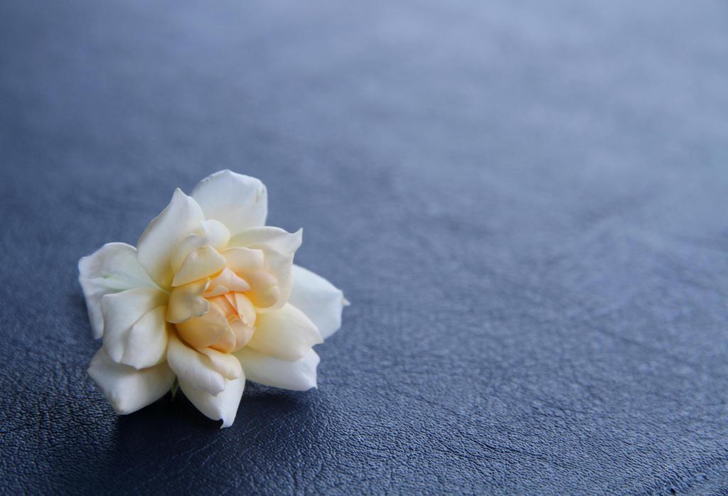 Little rose by ChanelStudio