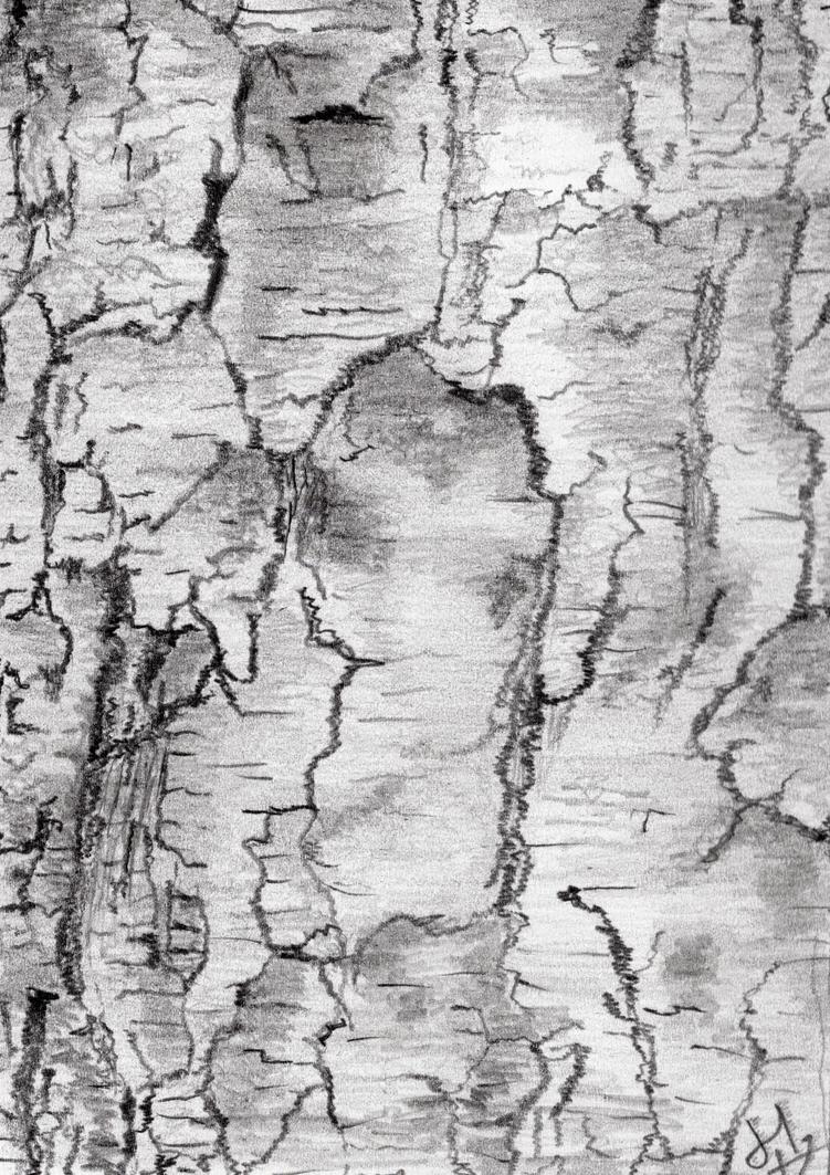 Texture Study 001 - bark - graphite by jerryhat