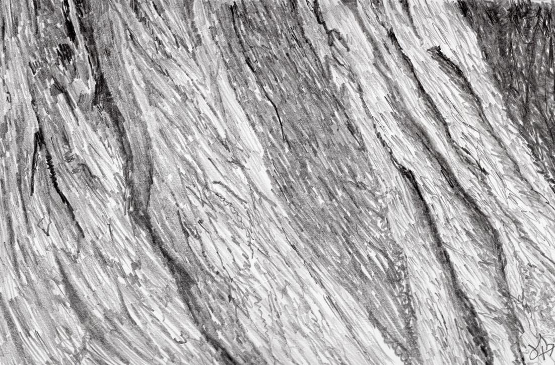 Texture Study 002 - bark - graphite by jerryhat