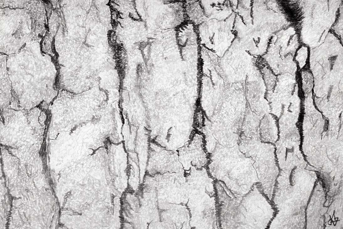 Texture Study 003 - bark - graphite by jerryhat