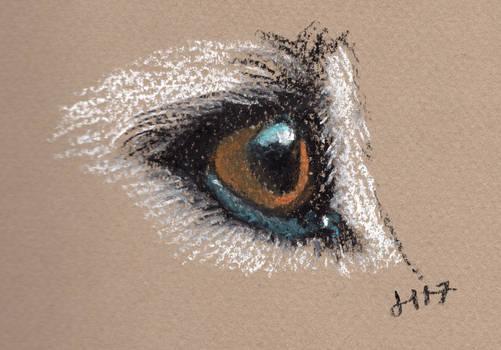 Dog Eye - pastels