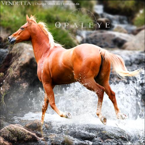 HEE Horse Avatar: Opaleye by VendettaImaging