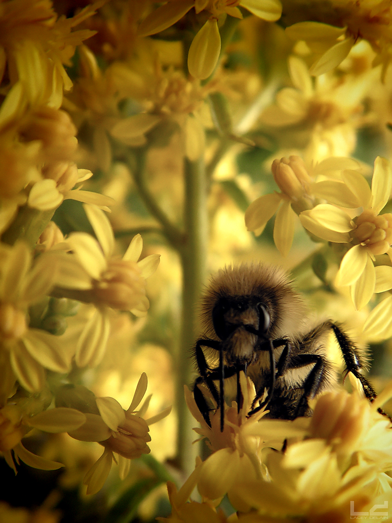 The Eden Project: Honeybee Macro by L-Delain