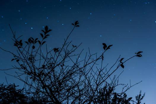 so spectacular starlight