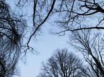 Dusky Trees