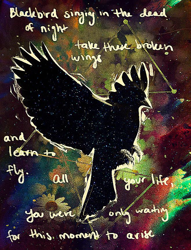 Beatles Lyric Image Blackbird By Elkerae