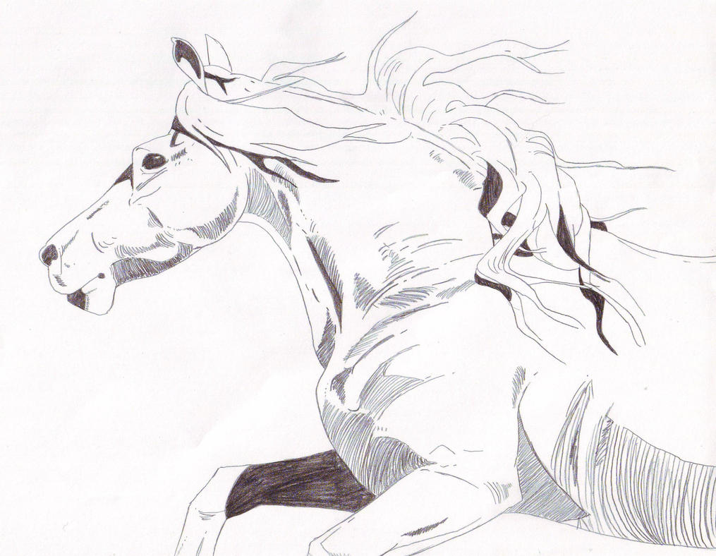 Running Horse by mvjnz on DeviantArt