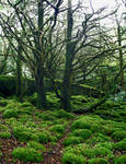 Forest_moss_trees_2