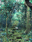 Background_Blue forest path