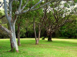 Park trees_1