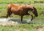 waterhorse_4