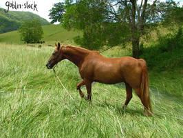 waterhorse_6 by GoblinStock