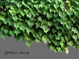 Vine by GoblinStock