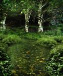 Pond Background