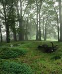 Fog Valley Background