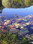 Water Plants_3