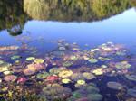 Water Plants_4