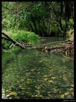 Pond_1 by GoblinStock