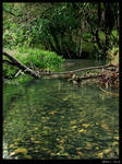 Pond_1