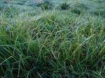 Frosty Pasture 4