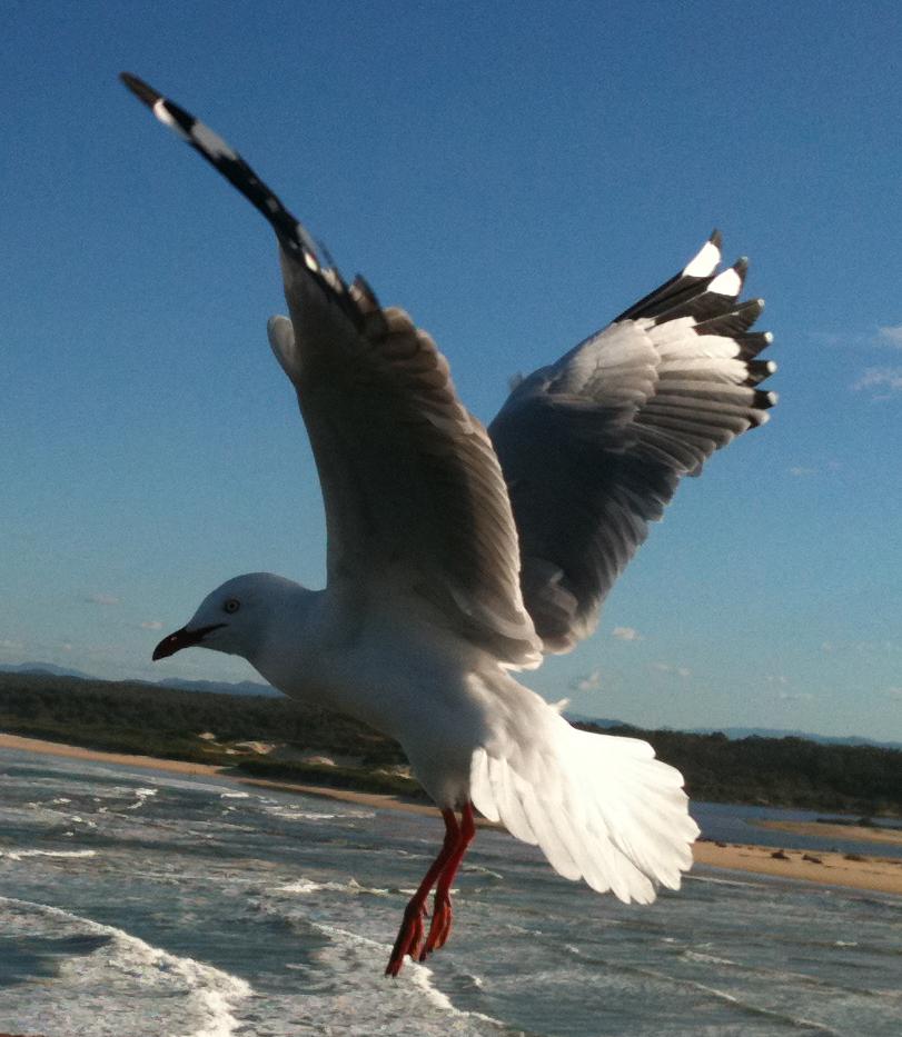 Seagull 8 by GoblinStock