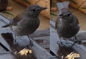 Grey Bird Returns_2