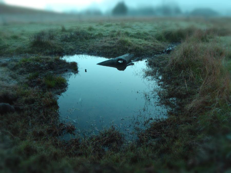 Winter Swamp 3