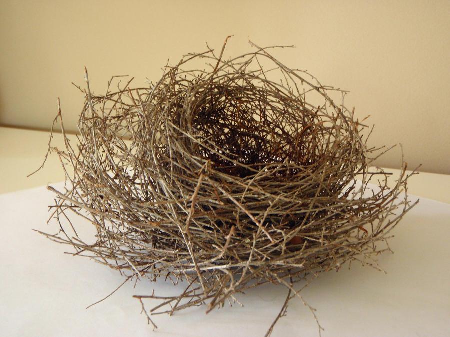 Nest 3 by GoblinStock
