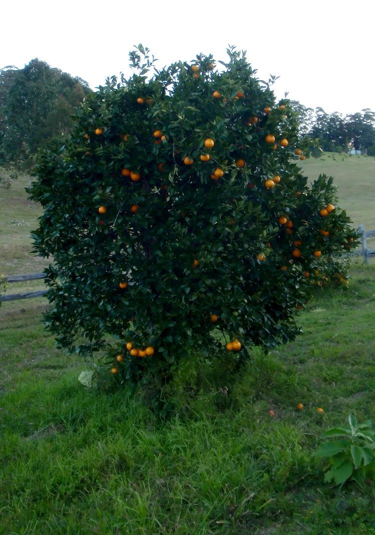 Speed dating orange tree loughborough college