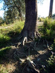 Riverbank Tree 1