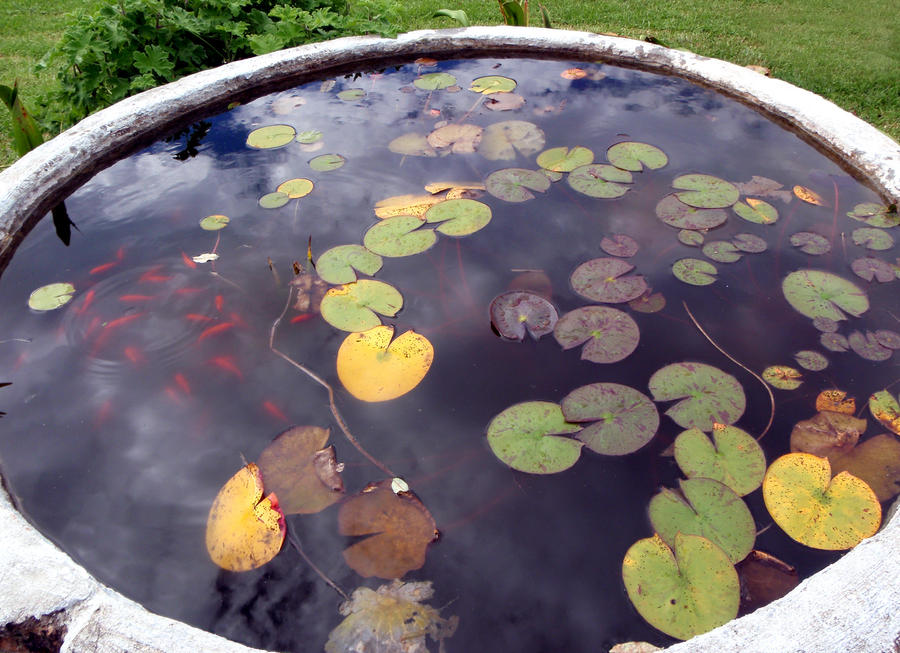 Lillypad goldfish pond 3 by goblinstock on deviantart How to build a goldfish pond
