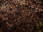 Organic Earth Texture