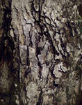 Wood Decay 2 Texture