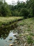 Meadow Creek 1