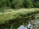 Meadow Creek 3