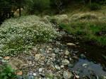 Meadow Creek 4