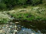 Meadow Creek 5