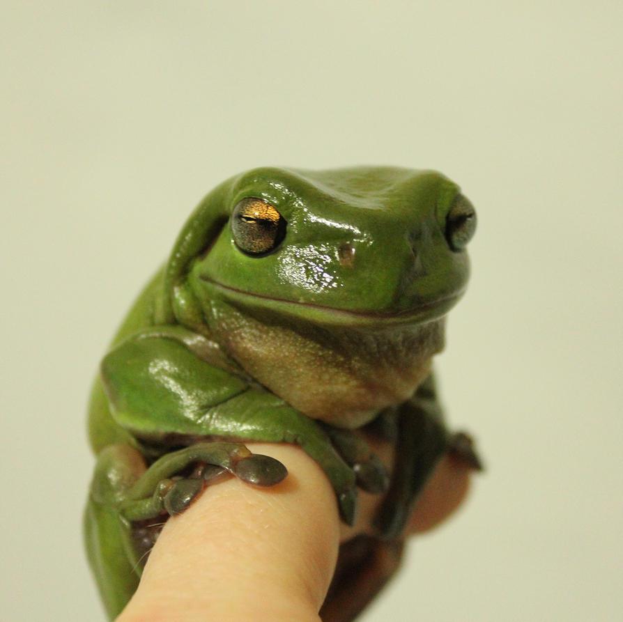 My Favorite Frog by GoblinStock