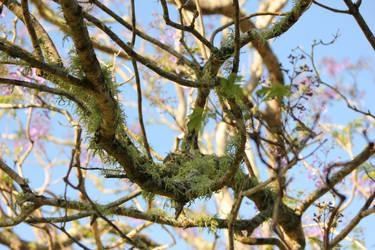 Lichen Branches 1 by GoblinStock