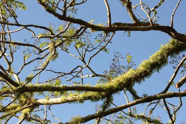 Lichen Branches 2 by GoblinStock