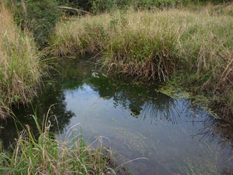 Swamp Weeds by GoblinStock