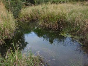 Swamp Weeds