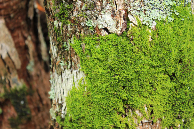 Moss and Lichen Texture on Tree
